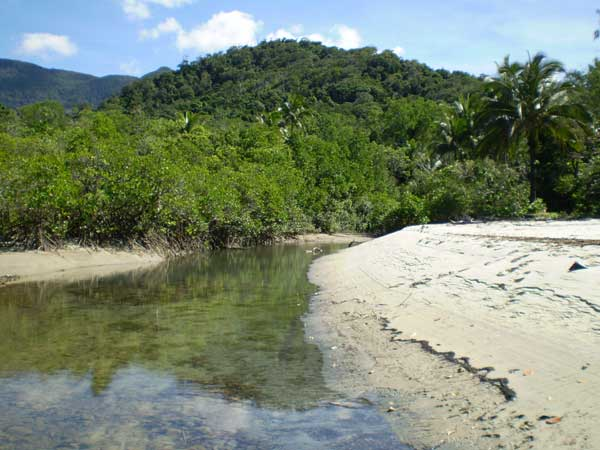 site of cape tribulation crocodile attack