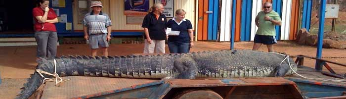 monser crocodile in borroloola