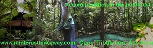 cape tribulation bed and breakfast accommodation in daintree north queensland