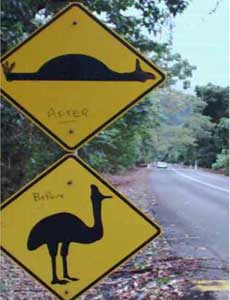 cassowary warning sign at cape tribulation
