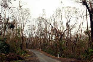 cyclone larry damage to the rainforest