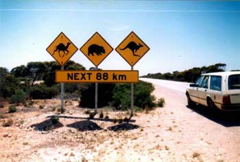 wombat warning signs