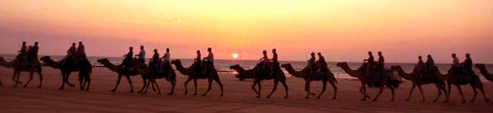 camel riding tours in australia